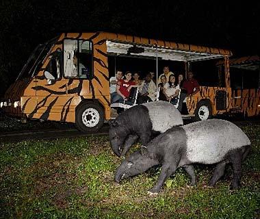 night safari singapore zoo microtravelling. Black Bedroom Furniture Sets. Home Design Ideas