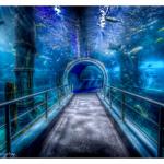 A Melbourne Aquarium