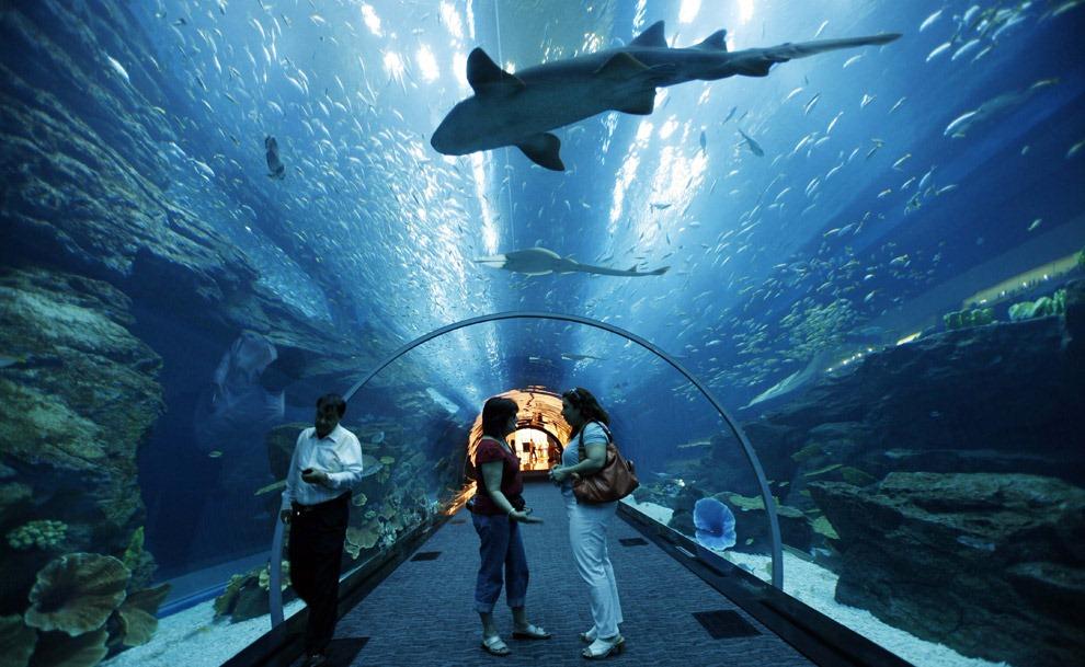 Dubai aquarium & Underwater zoo MicroTravelling