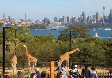 taronga-Zoo-sydney-111
