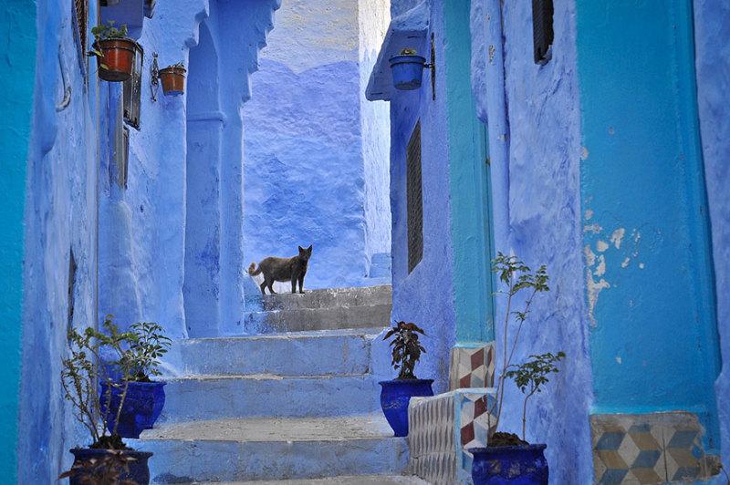 marocco-citta-muri-blu-chefchaouen-002