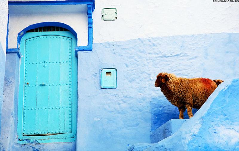marocco-citta-muri-blu-chefchaouen-007