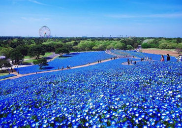 Park of Hitachi in Japan